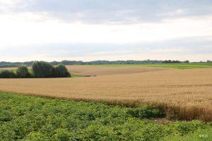 Landschap met zicht op de velden