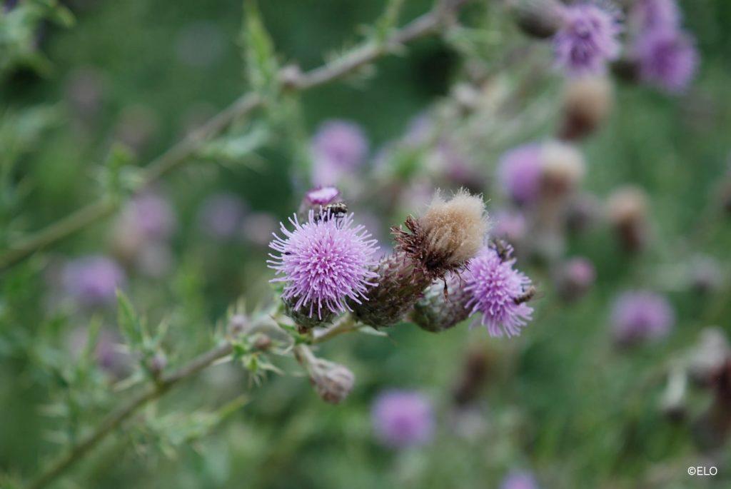 Insecten op een bloem